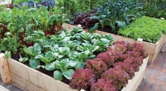 Как правильно чередовать овощные культуры