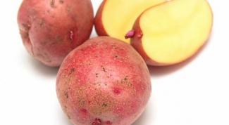 """Выращивание картофеля """"Розара"""""""