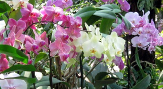 Горшок для орхидеи