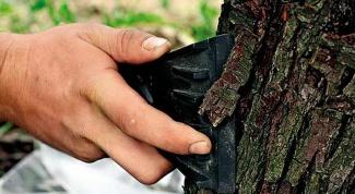 Как лечить раны и дупла на деревьях