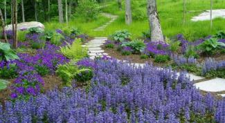 Растения, привлекающие любовь и процветание
