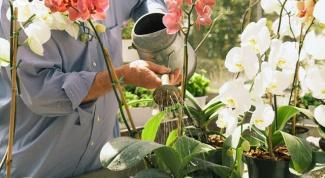 Как поливать орхидеи в домашних условиях