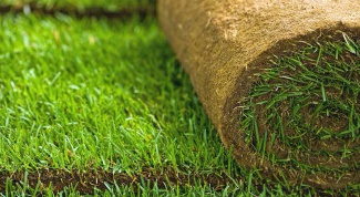 Как правильно положить рулонный газон