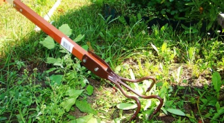 How to get rid of weeds in the garden or the cottage