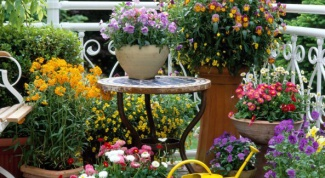 What perennial flowers can be planted in June in the country