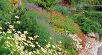 Посадка и уход за почвопокровными растениями