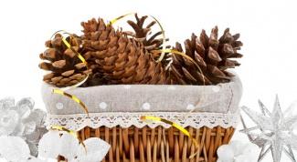 Как сделать елку из еловых и сосновых шишек