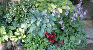 Как красиво оформить тенистый уголок в саду