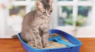 Как сделать кошачий лоток своими руками