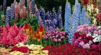 Features planting perennial flowers in July