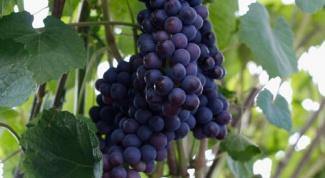 Заготовки на зиму из винограда