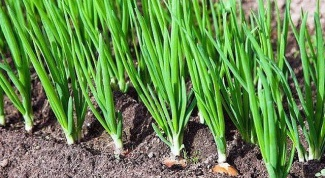 Why is onion rot in the garden