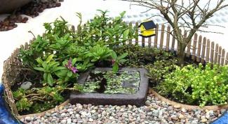 Миниатюрный сад на подоконнике