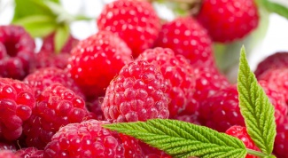 Recipe for raspberry wine