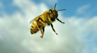 Укусы насекомых: как предотвратить и чем лечить