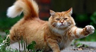 Как убрать запах кошачьей мочи