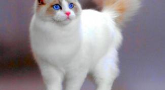 Симптомы и лечение непроходимости кишечника у кота