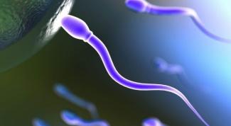 Как сдать спермограмму и расшифровать результаты