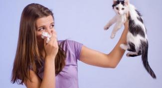 Известные аллергены, встречающиеся в домах и квартирах