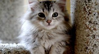 Как накормить кошек вкусной и здоровой пищей