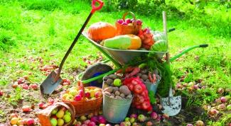 Какие работы проводить в огороде в сентябре
