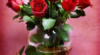 How to grow a rose from a bouquet of two ways