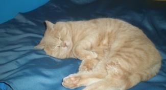 Как лечить цистит у кошек в домашних условиях