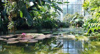 Оранжерея «Фата Моргана» в Пражском ботаническом саду