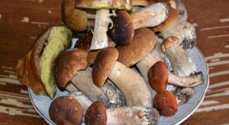 Как приготовить свежие грибы