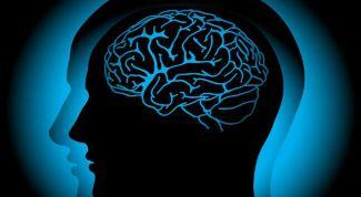 Как устроен человеческий мозг