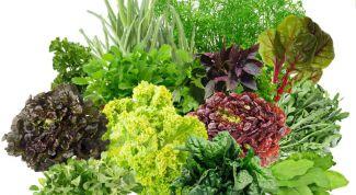 Как выгнать ароматную зелень к Новому году