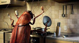 Как травить тараканов в 2018 году