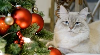 Как уберечь ёлку от кошки