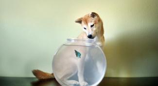 Сочетание гороскопов: Собака-Рыбы