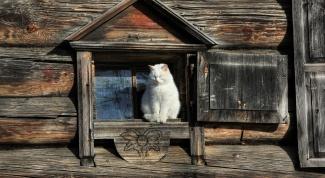 История кошек в России