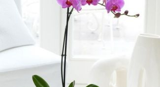 The choice of pot and soil for Phalaenopsis orchids