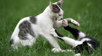 Как кошки нападают и защищаются
