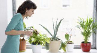 Как выбрать для дома подходящее растение?