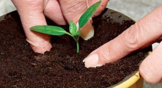 Лунный календарь для посадки растений в марте 2016 года