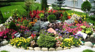 Как выбрать растения для альпийской горки