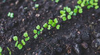 Что посадить в марте-апреле на рассаду