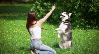 How to teach your dog to obedience