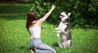 Как приучить собаку к послушанию