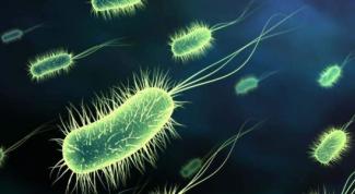 Пищевые токсикоинфекции: причины, диагностика, профилактика