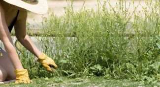 How to get rid of weeds on the plot