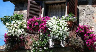 Basic rules and tips when gardening balcony