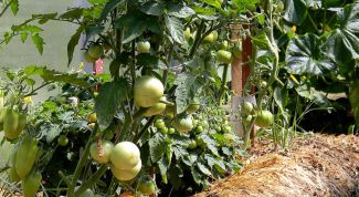 How to plant tomatoes, peppers and cucumbers in the greenhouse