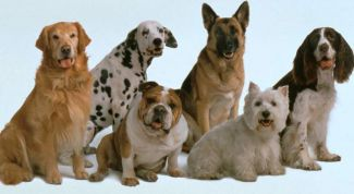 Six professions who are obedient dogs