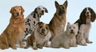 Шесть профессий, которые покорились собакам