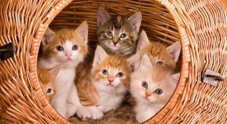 Подготовка родильного места для кошки